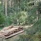 Кубици дърва - а дали е законно?