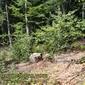 Пън на дърво край село Чуйпетлово