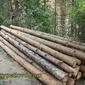 Подредени за извозване дървени трупи