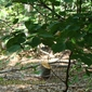 Пън на дърво край Чуйпетлово