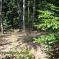 Скрит пън на дърво край Чуйпетлово